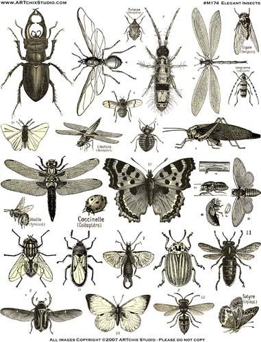 Насекоми,инсекти